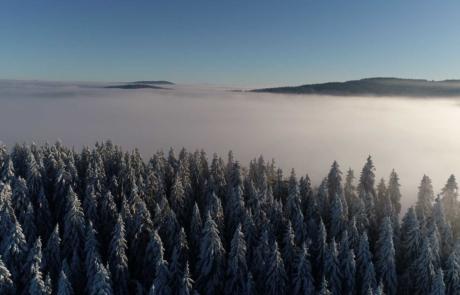 Wald Wolkenkratzer