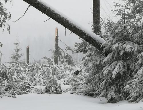 Sturmtief Sabine auf der Thurnerspur